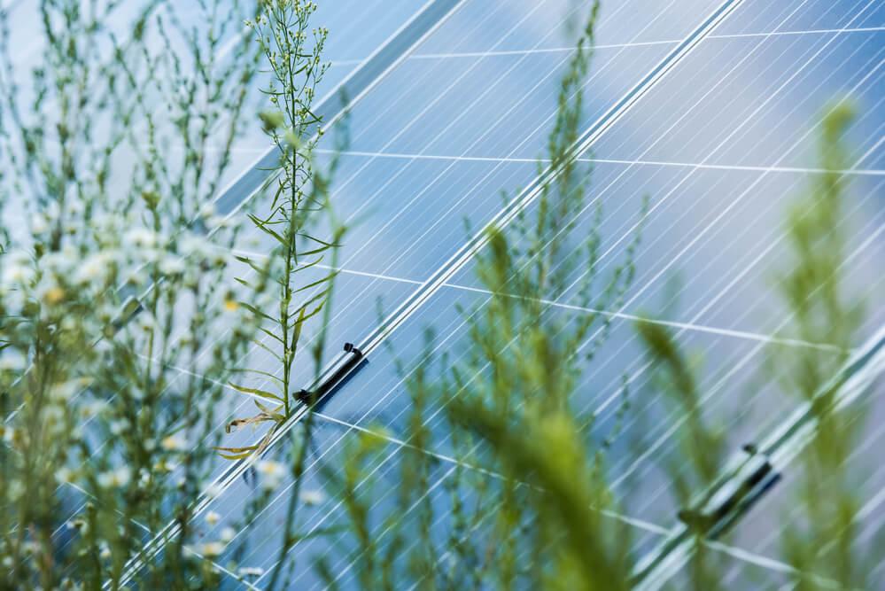 Selective blue energy batteries - Small Energy Bill